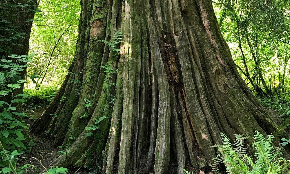 Excelente lugar... se llega por un bosque muy lindo con una caminata de 30' .  Cruzando la vía d
