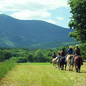 Horseback, carriage rides-daily yr-rd.  White Mtn. views -Stables at Farm by the River  B and B