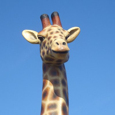 There's a rumour a giraffe has been spotted watching over the carpark!