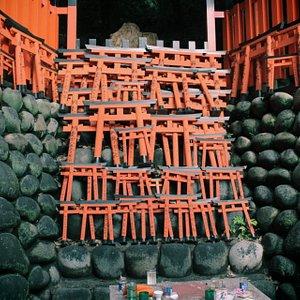 torii gates