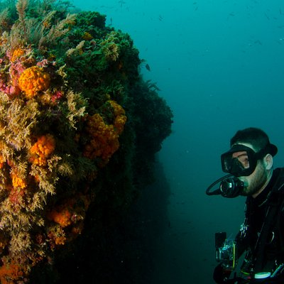 nice dive in marina del este, watching orange corals and nudibranchs in the natural marine reser