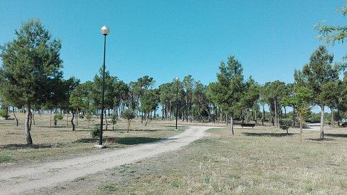 Camino iluminado dentro del parque.