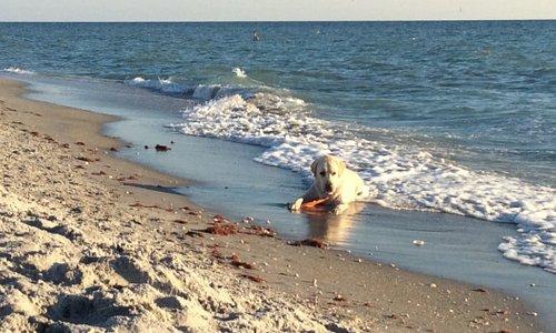 Maxwell at the Venice dog beach.