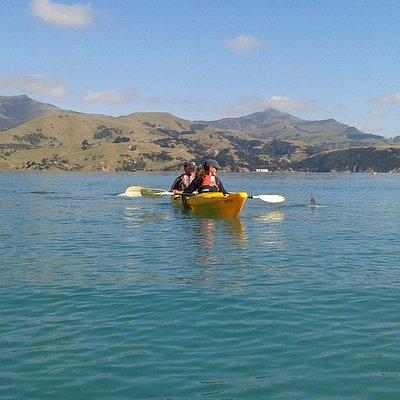 Wildlife Kayaking in Akaroa Harbour