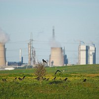 Crows with industrial backdrop