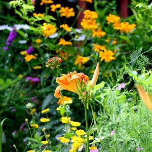 Plants and Blooms from Stratford Shakespearean Gardens