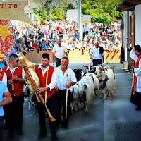 """Piazza San Vito il 15 Giugno - La """"Turniata"""" dei pastori con il proprio gregge"""
