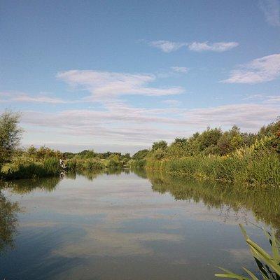 Partridge Lakes Willow