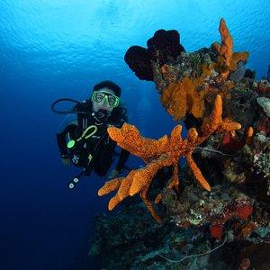 Diving With Atlantis Varadero, Wrecks, Reef and Wall Dives.