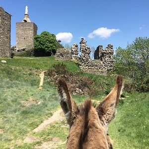 Schon Robert L. Stevenson wanderte zusammen mit einem Esel durch Südfrankreich und erlebte zahlr