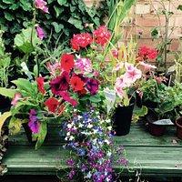 Excellent range of homegrown plants.