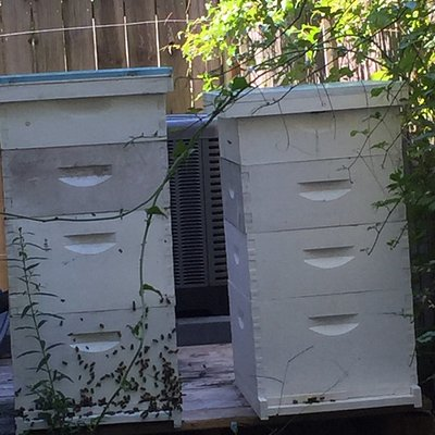 Also have honey bees.