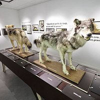 Loups naturalisés