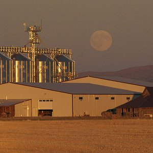 Mecca Grade Estate malthouse with moonrise and hawk in foreground