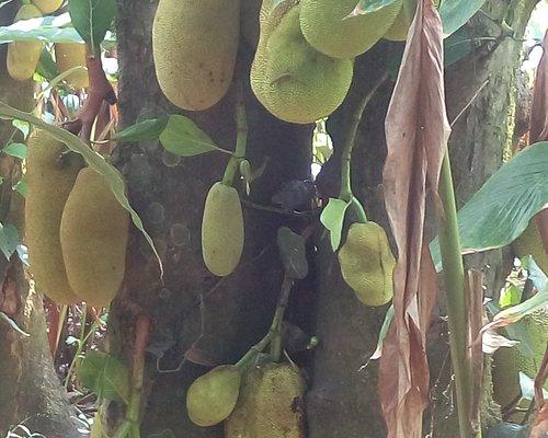 Spice garden visit in Munnar