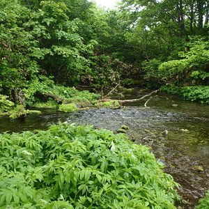 湧水が小川を作る