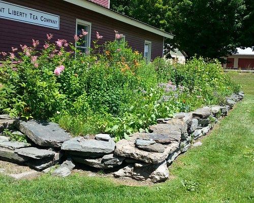Herb Garden at Vermont Liberty Tea