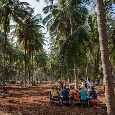 How about a picnic lunch under South India's best coconut groves?