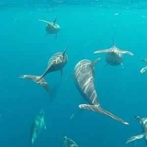 GoPro shot of a pod of dolphins bowriding our boat.