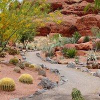 Pathways wind throughout Red Hills Desert Garden