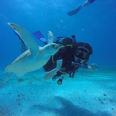 Diving with turtles in crystal clear waters is a must. Ask for this dive!