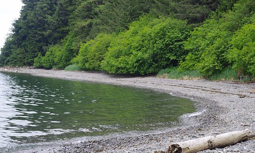 A remote beach we stopped at. There was an eagle's nest up in the trees.