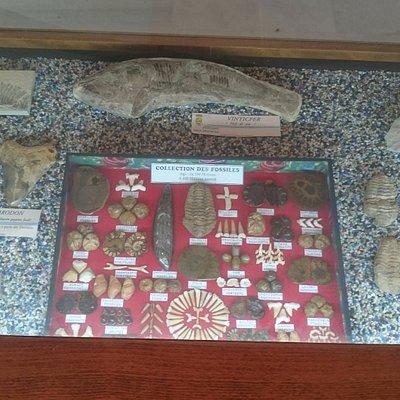 Museo de Medicina Antigua Ciencias Naturales y Arqueología