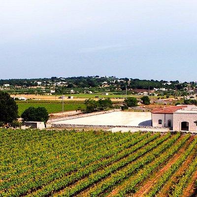 Vista panoramica Cantina I Pàstini