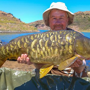 One of many great fish during my time with carpgrancanaria.com
