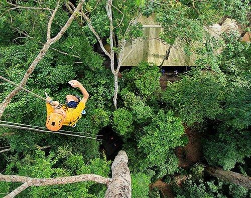 Flight of the Gibbon Chonburi