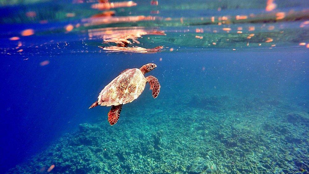 Turtle safari every Wednesday, Thursday Sunday,