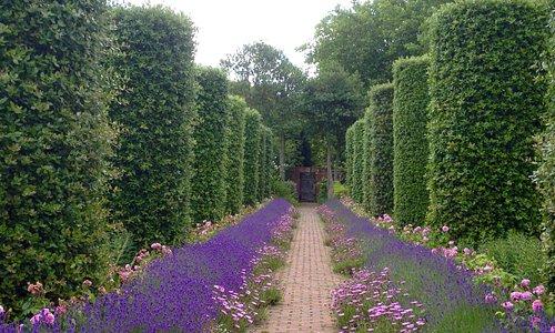 Garden at The Salutation