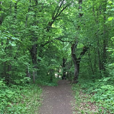 Beautiful paths in the oak forest!