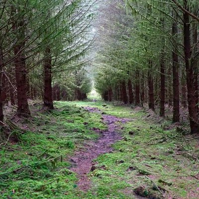 Carrickaholten Forest. Killeter Village. Co Tyrone. 1 of the 3 suited for walking.