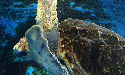 ウミガメの水槽