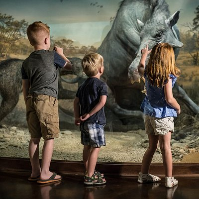 See ancient animals that roamed the Ozarks thousands of years ago.