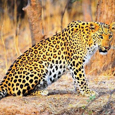 Leopard of Jhalana