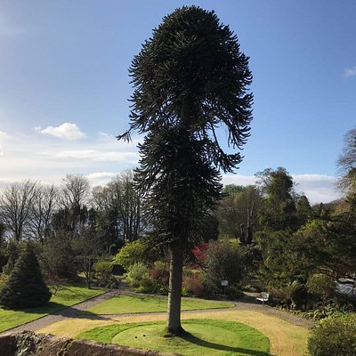 Ascog Hall Gardens and Victorian Fernery