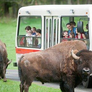 Discovery Tram Tour
