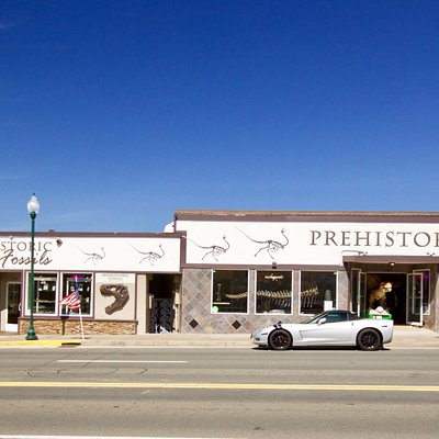 Prehistoric and Prehistoric fossils storefront