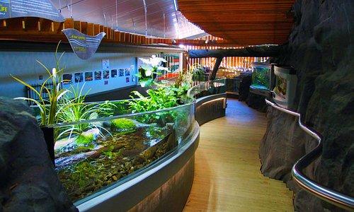 Our freshwater aquarium showcasing our native aquatic species.