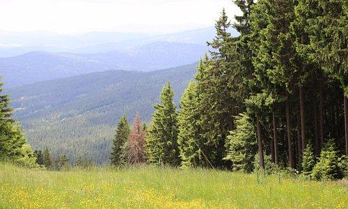 То же Шпичак. Все это Шумава (национальный парк Чехии).