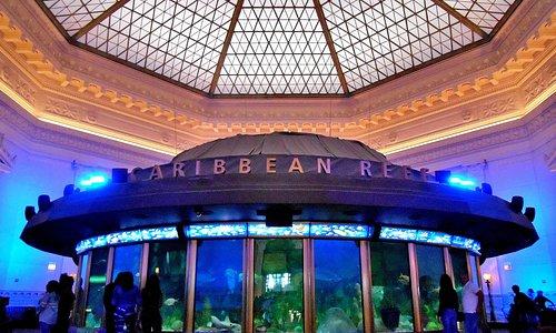 Shedd Aquarium - 1930s Caribbean Reef exhibit