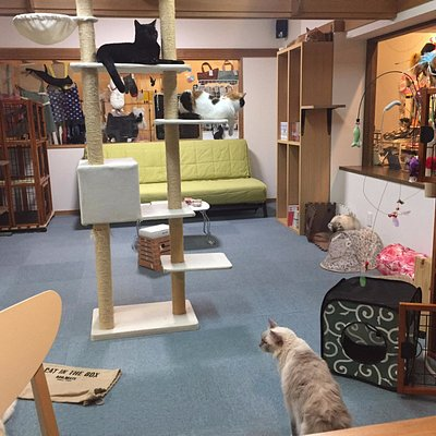the cat play room