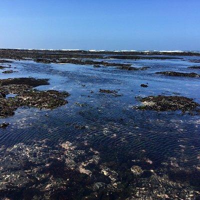 Moss Beach incoming tide