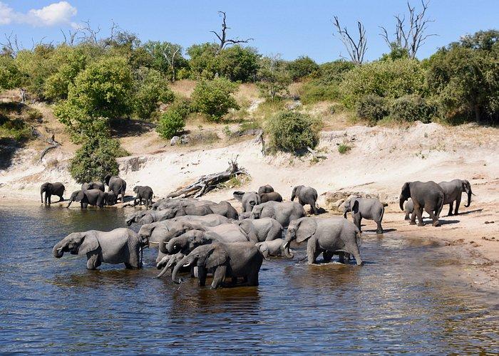 Elephant Bay - Chobe