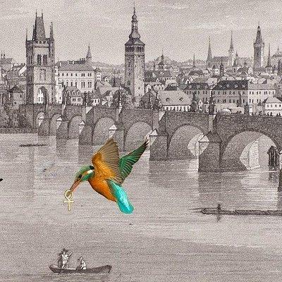 King fisher over Charles Bridge