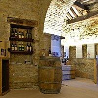 Il Vino Verdicchio come protagonista del Museo