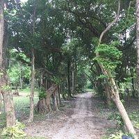 Sopha Botanical Gardens