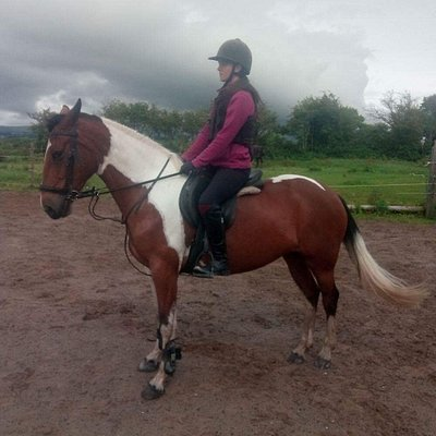 Quiet ponies for all levels of horse riding